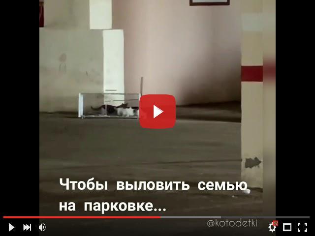 video_preview_0dd97235794dd4913a1b4f5e0d08904d.jpg